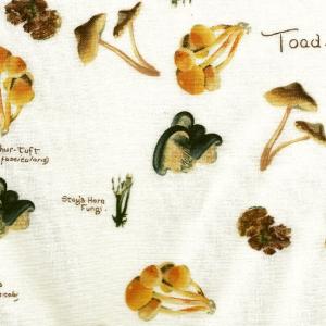 Pilze auf ecrufarbenem Hintergrund